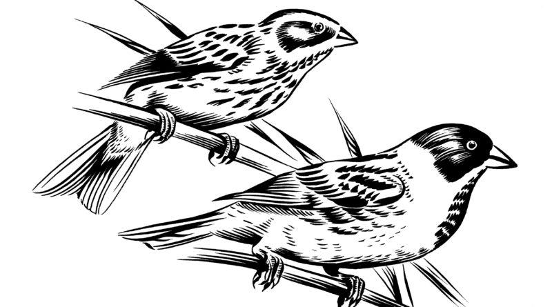 Vogelshow De Rietgors Kockengen